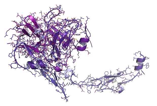 Proteina S